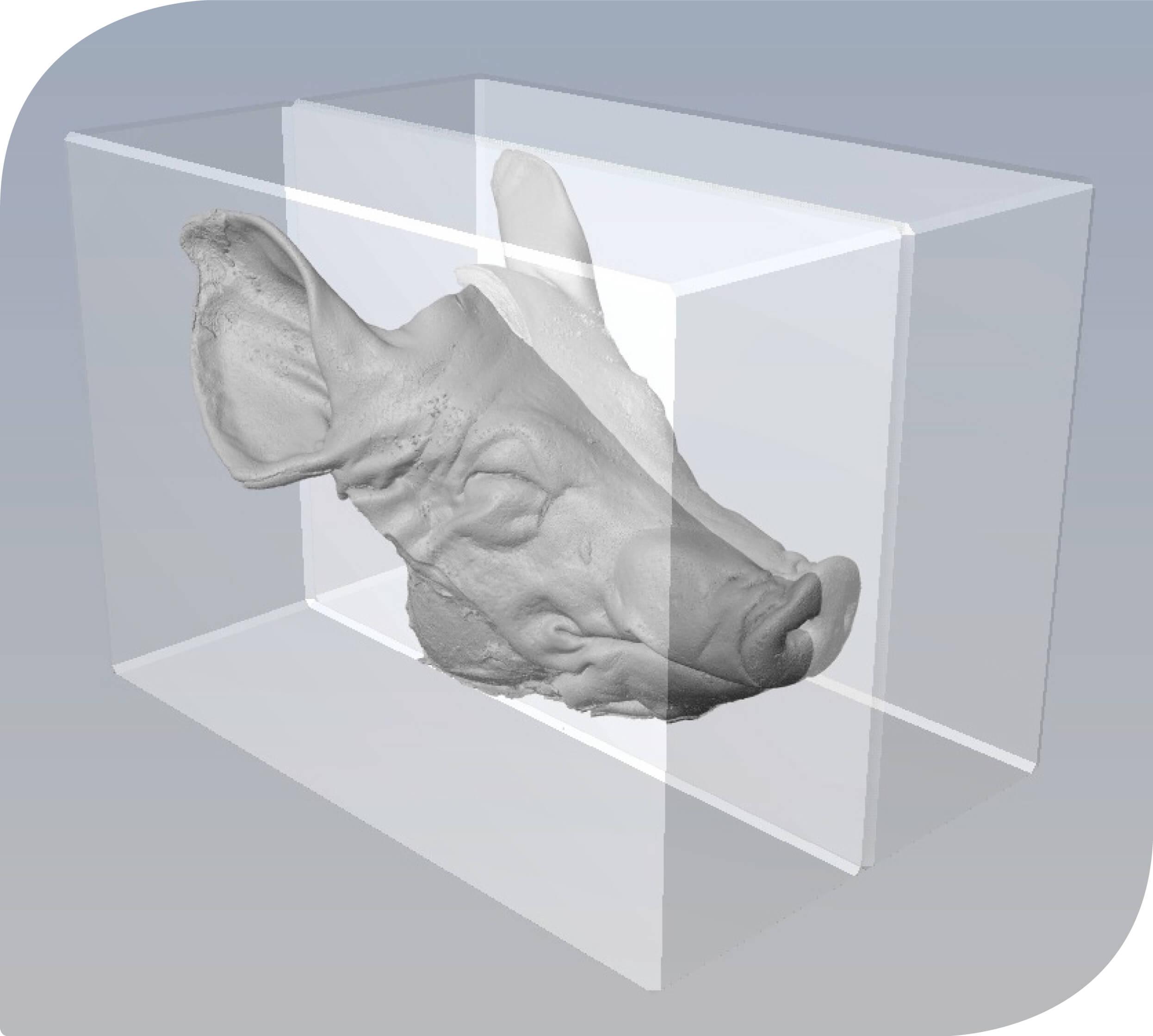 3D Pig Head